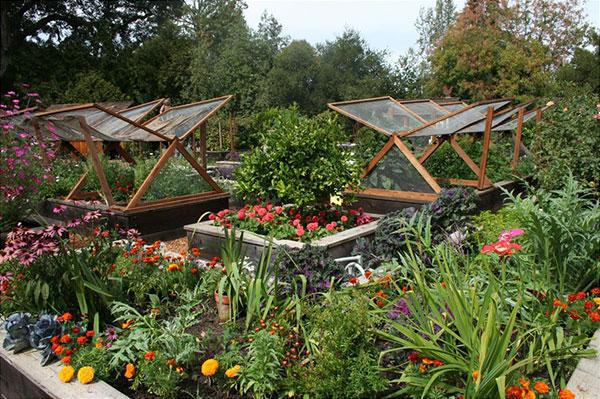 School Gardens  GreenHeart Ed
